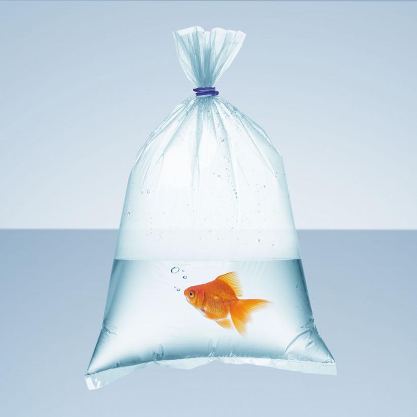 Aquaristics fish in plastic bag